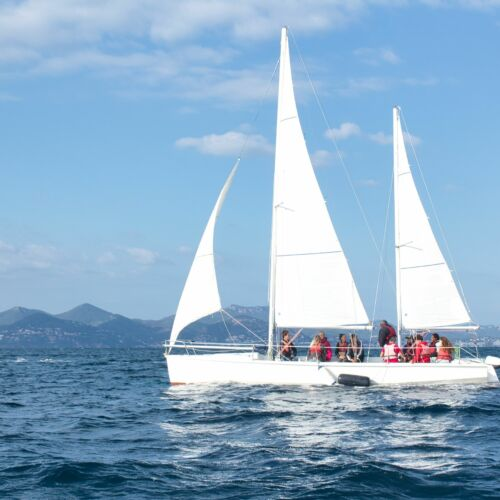 Reconnect with the professional world through sailing